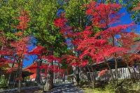 和歌山県 紅葉の高野山