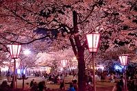 新潟県 高田公園ライトアップ