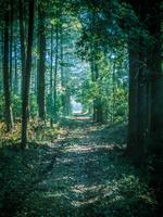杉の森を抜ける直線のあぜ道