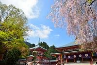 滋賀県 比叡山延暦寺 法華総持院東塔(左)と阿弥陀堂(右)