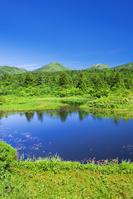 青森県 八甲田山と夏の睡蓮沼
