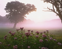 長野県・木島平村 奥志賀・カヤの平高原(朝)