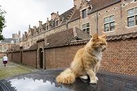 ベルギー アントワープ 車の上の猫