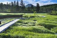 北海道 朝の神仙沼高層湿原