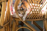 イスタンブール 籐の椅子に座る子猫