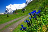 スイス  エンチーアン