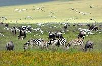 タンザニア ンゴロンゴロ保全地域