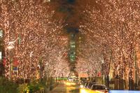 東京都 丸の内イルミネーション