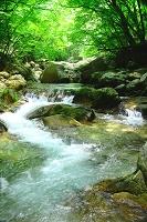 山梨県 本谷川渓谷 渓流