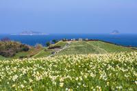 長崎県 スイセン咲く野母崎と軍艦島と中ノ島