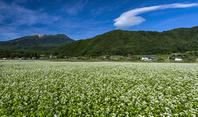 長野県 そば畑と御嶽山と吊し雲