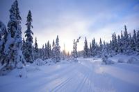 スウェーデン 雪道