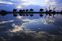 南アフリカ エレファントサファリ