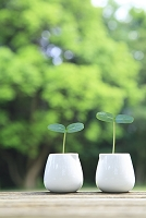 木製テーブルに置いたミルクカップと双葉