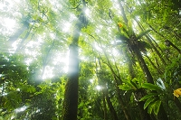ハワイ ジャングル