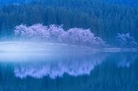 新潟県 中子の池