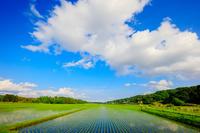 栃木県 田園のわた雲