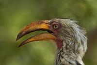 南アフリカ共和国 クルーガー国立公園 鳥