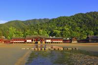 広島県 夕日を受ける厳島神社