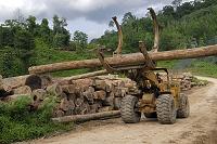 マレーシア ダヌムバレー保護地域 伐採