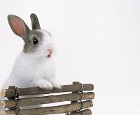 立ち上がって柵に手をつくウサギ