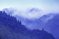 京都府 霧の北山風景