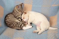 子猫と子犬の睡眠