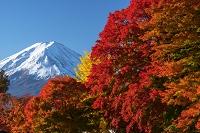 山梨県 もみじ回廊と富士山