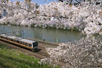 東京都 桜咲く外濠とJR中央線