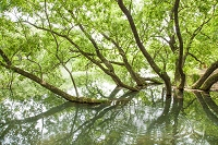 愛媛県 三間町中山池の新緑
