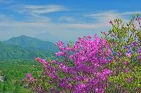 山梨県 美しの森 ツツジと富士山遠望