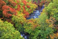 岩手県 紅葉の松川渓谷
