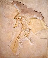 始祖鳥の化石(ドイツ標本)