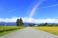 長野県 稲田と田園