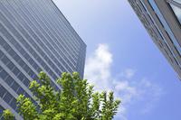 ビジネス街のビルと街路樹