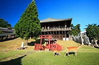 奈良県 東大寺 二月堂と鹿