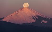 神奈川県 早朝の富士山頂と満月 パール富士