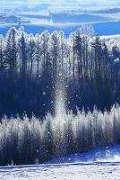 北海道 サンピラーと霧氷