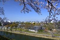姫路 姫路城 桜と西の丸庭園から街並みを見る