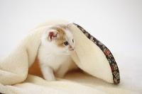毛布にくるまる仔猫