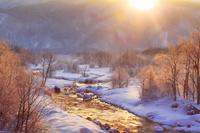 長野県 白馬村 朝日の光と霧氷の樹林と松川