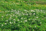 岐阜県 弓折岳の花畑