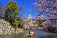 兵庫県 姫路城の桜