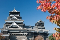桜の紅葉と熊本城