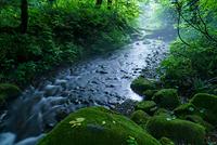鳥取県 木谷沢渓流