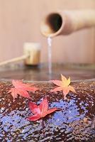 静岡県 伊豆市 修善寺 手水鉢と楓の落ち葉