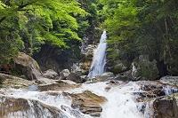 奈良県 笹の滝