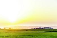 北海道 夕日に染まる初夏の丘