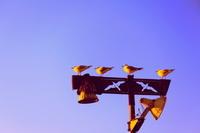 夕陽を浴びる鳥たち
