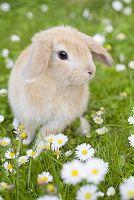花畑と子ウサギ
